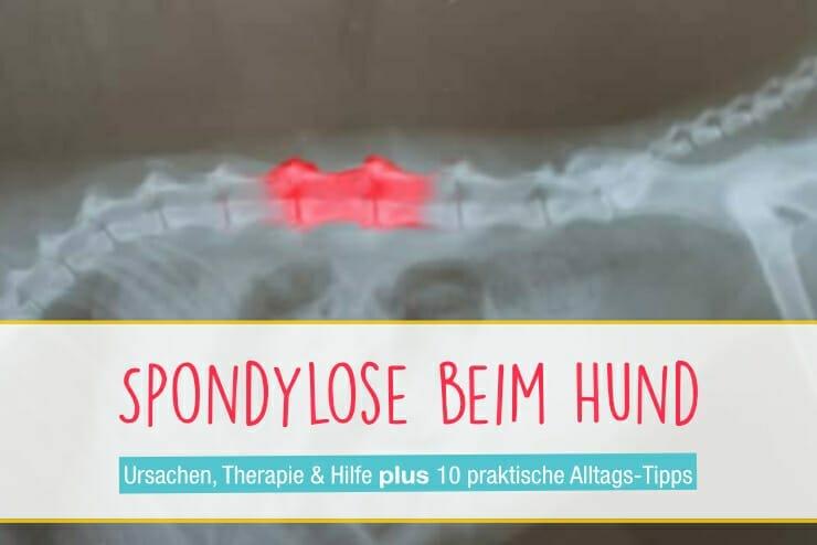 Spondylose Hund
