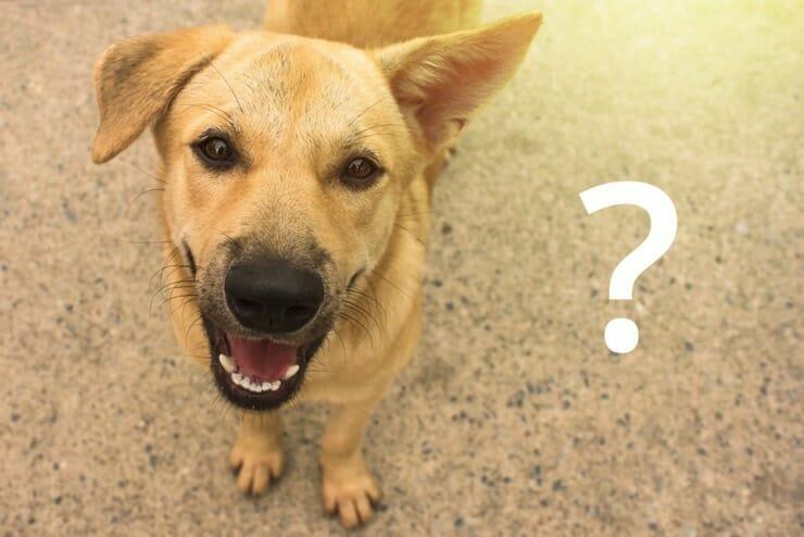 Spondylose beim Hund Häufige Fragen