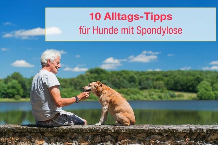 Spondylose Hund Lebenserwartung