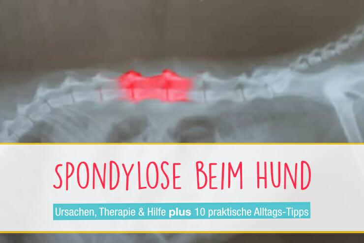 Spondylose_beim_Hund