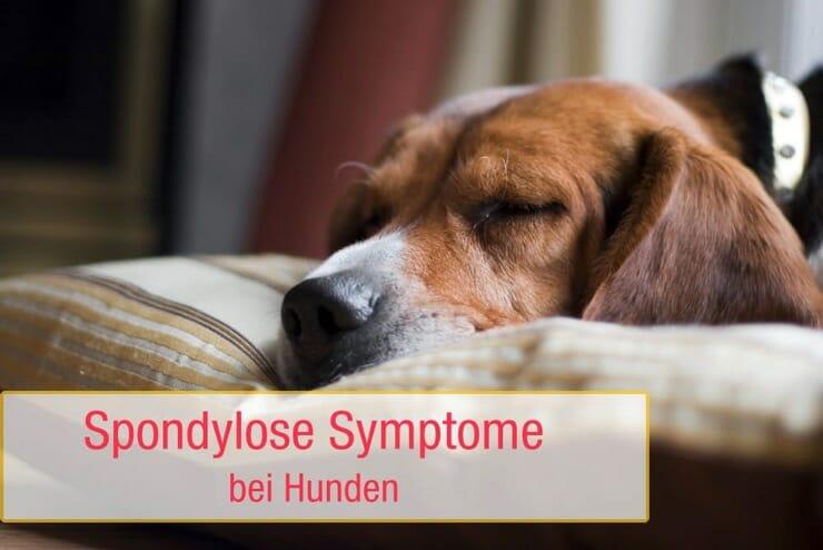 Spondylose Symptome Hund