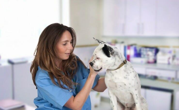 Therapie-und-Verlauf-Spondylose-Hund