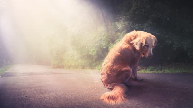 Tiertafel für alte Hunde