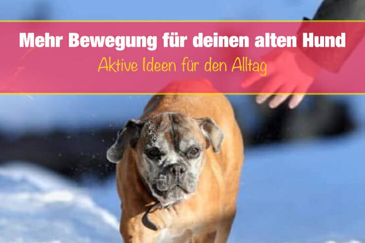Bewegung für alte Hunde