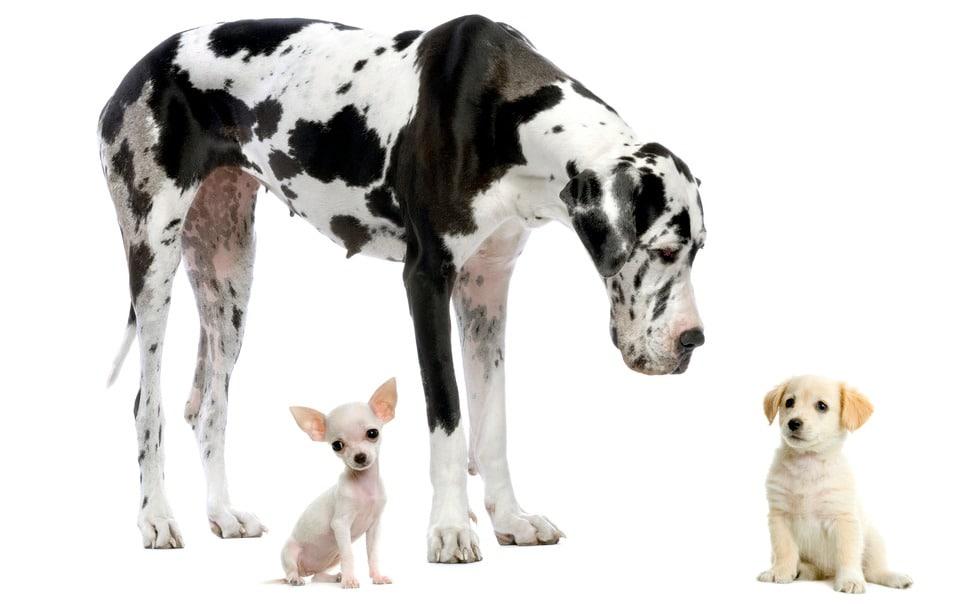 alter kleine u große hunderassen