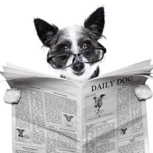 Hund News
