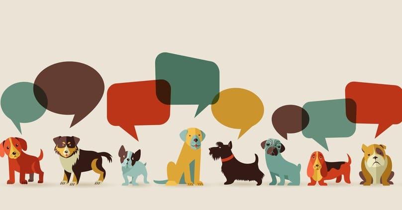 hundealter bestimmen