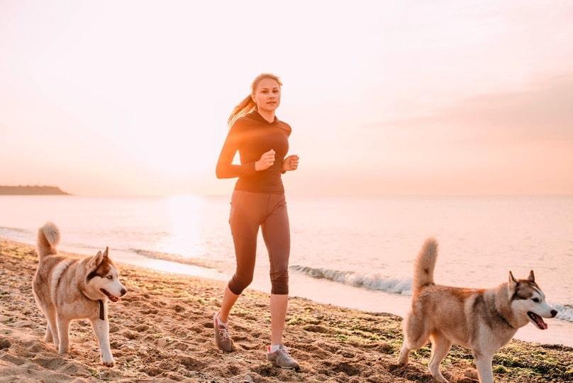 langes und gesundes Hundeleben
