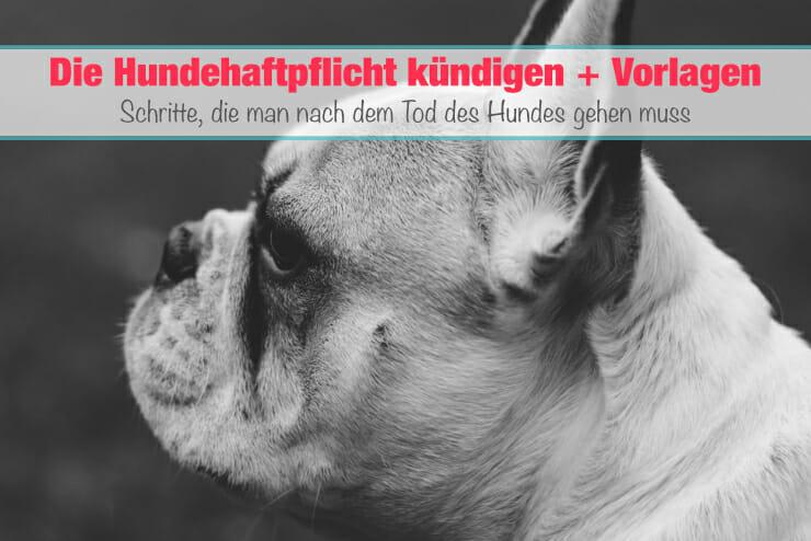 Hundehaftpflicht kündigen bei Tod des Hundes