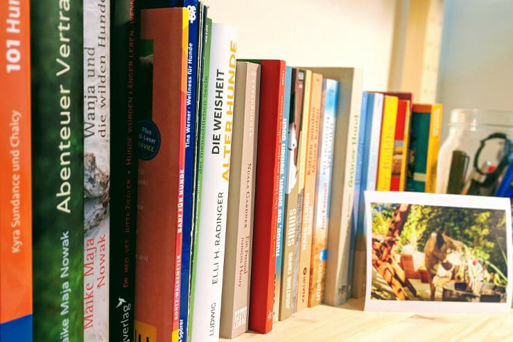 Hundebücher - Empfehlungen, Bestseller, Neuerscheinungen