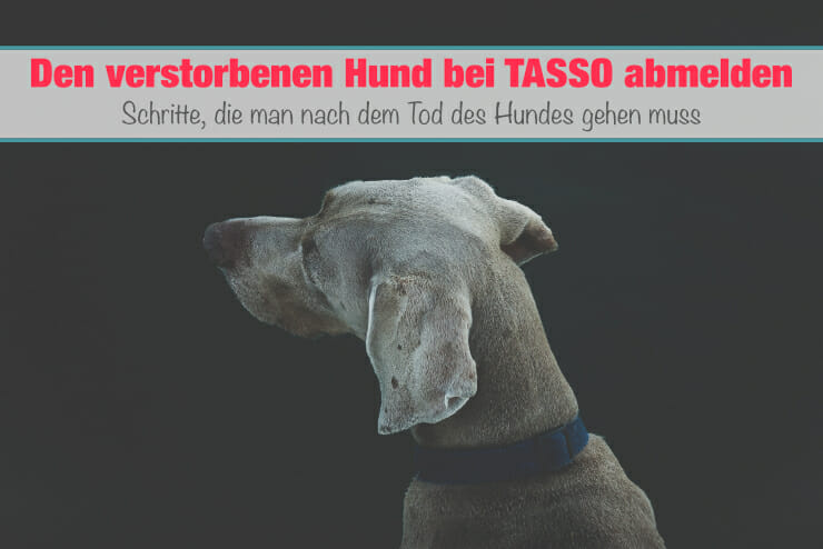 verstorbenen Hund bei TASSO abmelden
