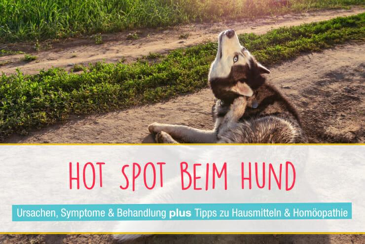 Hot Spot Beim Hund Ursachen Diagnose Behandlung Seniorpfoten