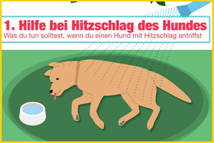Erste Hilfe Hitzschlag Hund
