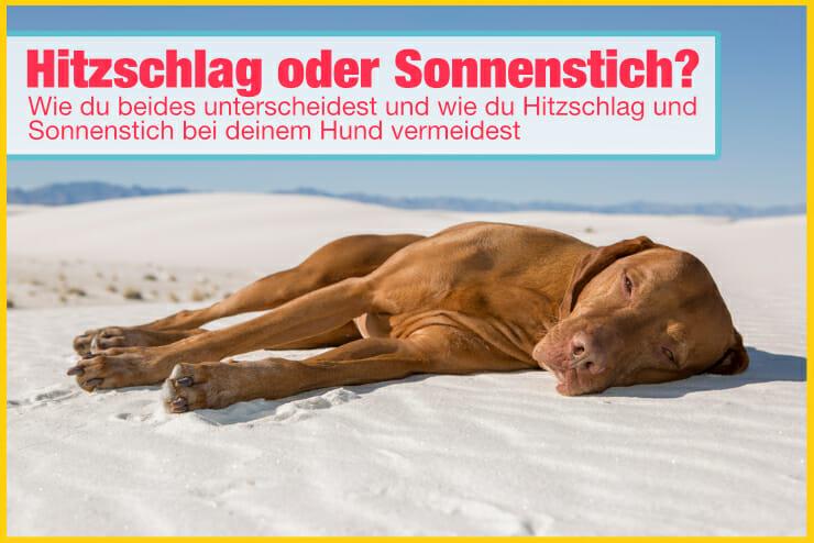 Hitzschlag oder Sonnenstich beim Hund