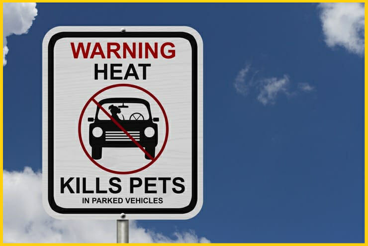 Hunde bei Hitze nicht im Auto lassen