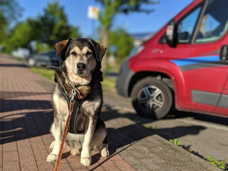Natuerliche Zeckenmittel fuer Hunde