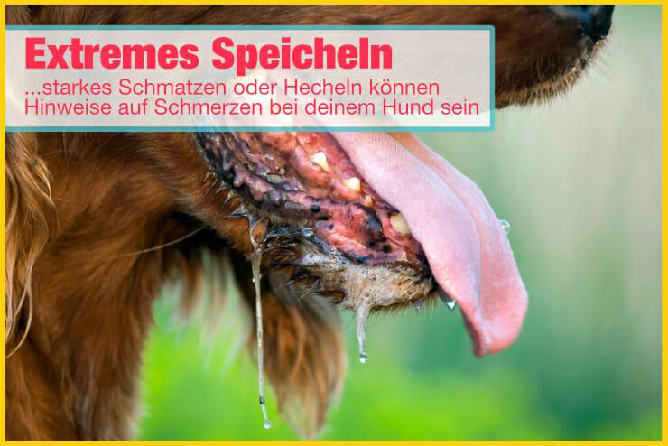 Speicheln Schmatzen Hecheln bei Hunden