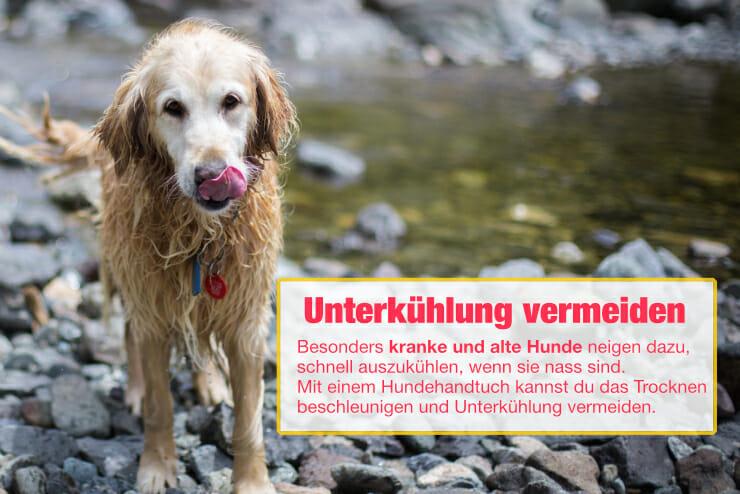 Unterkühlung vermeiden bei alten Hunden