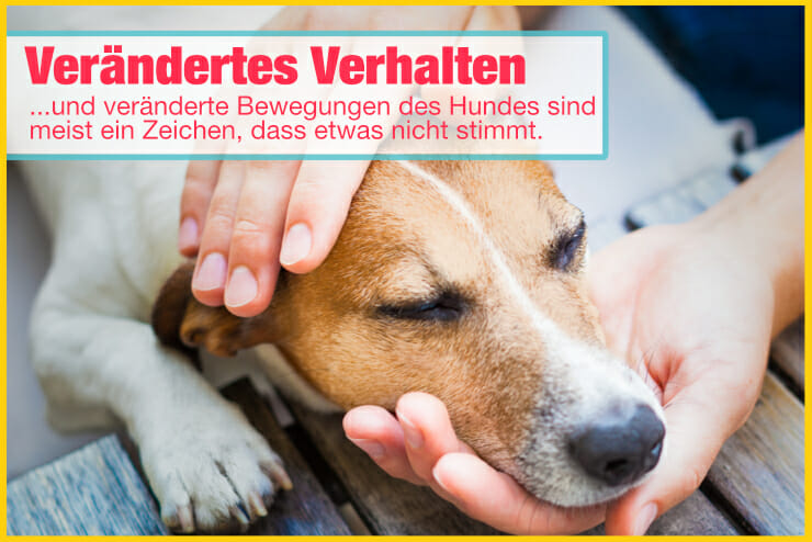 Verhalten und Bewegungen bei Hunden