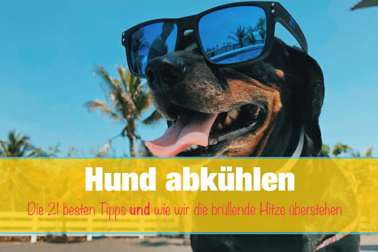 Hund abkühlen im Sommer und bei Hitze