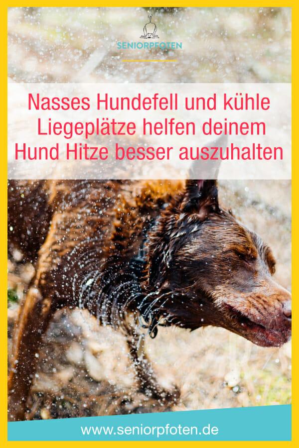 Hund abkühlen - nasses Fell und kühler Liegeplatz