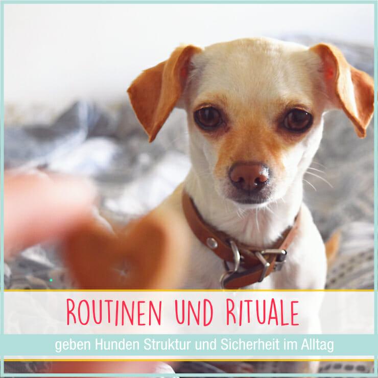 Hunde Routinen und Rituale