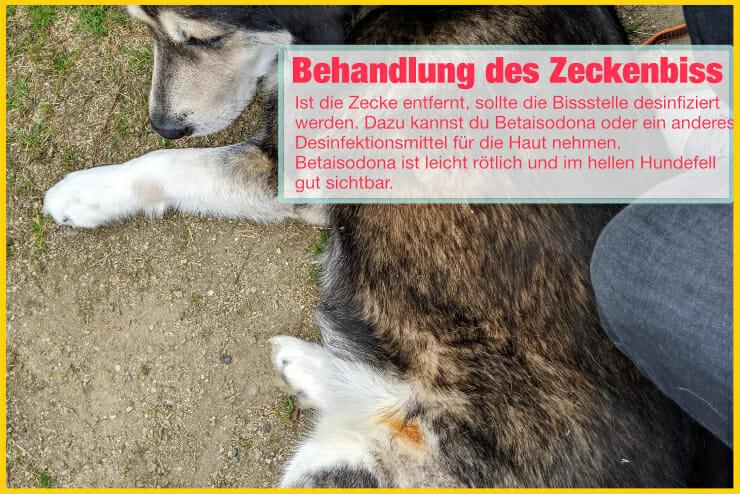 Zeckenbiss beim Hund behandeln