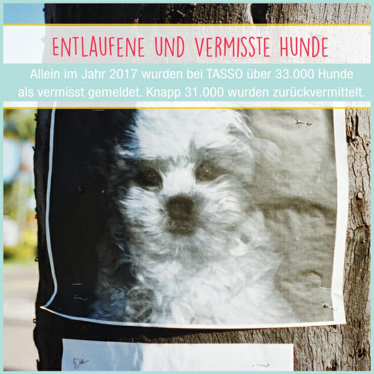 Entlaufener Hund - vermisster Hund