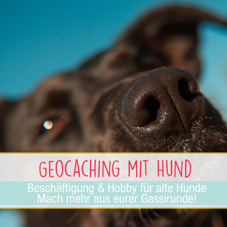 Geocaching für Hunde