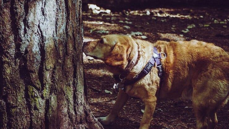 Hund Nasenarbeit - schnueffeln