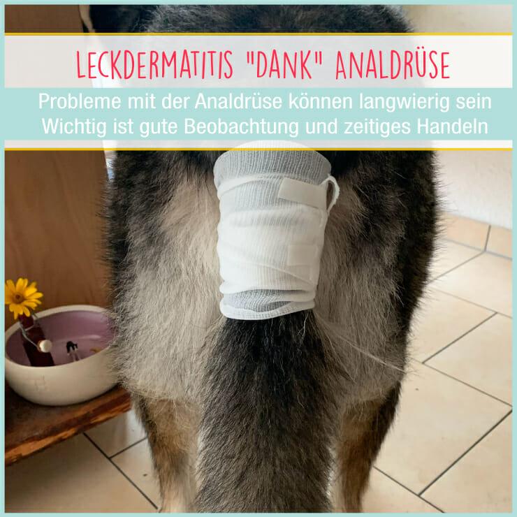 Analdrüse Hund Leckdermatitis