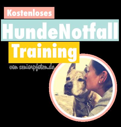 Kostenloses Hunde Notfall Training Seniorpfoten