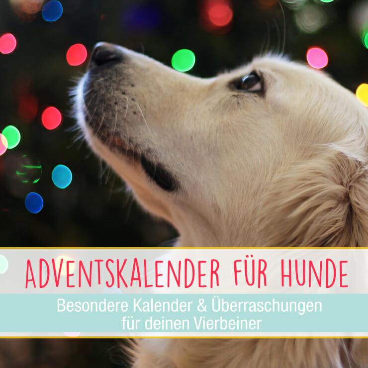 Adventskalender Hund
