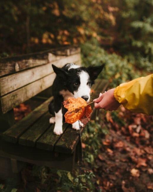 hund erste hilfe