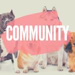 seniorpfoten hunde community