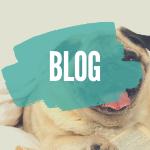 seniorpfoten hundeblog