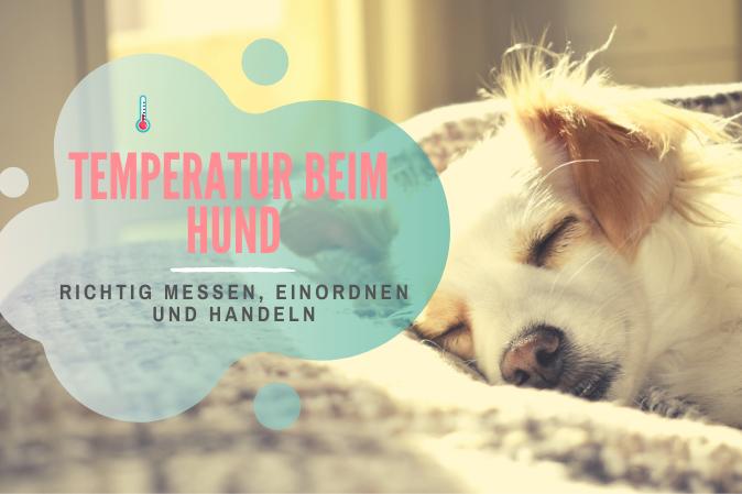 Temperatur beim Hund