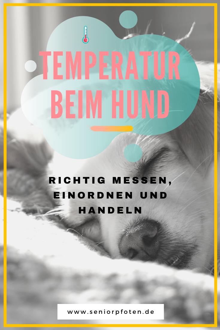Temperatur beim Hund - messen, einordnen,handeln